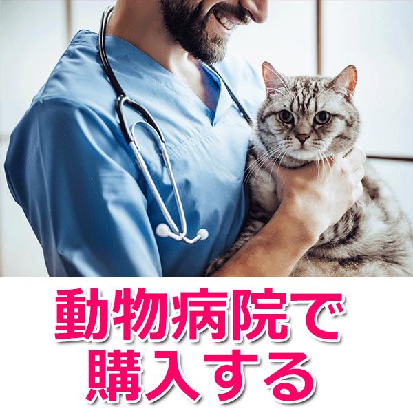 動物病院で購入する