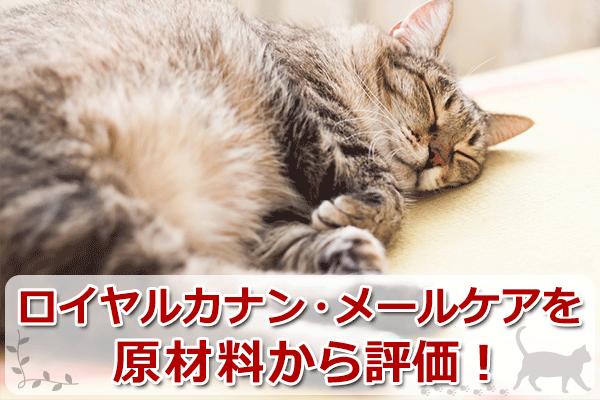 ロイヤルカナン・ベッツプラン「メールケア」を辛口評価!