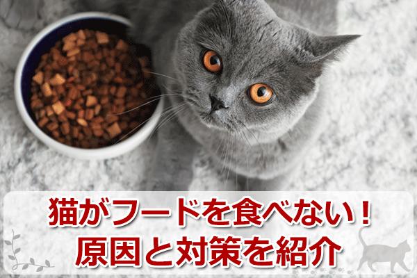 猫が餌を食べないのはストレス?原因と2つの対処法