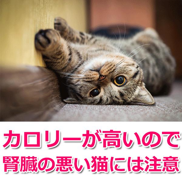 カロリーが高いので腎臓の悪い猫には注意
