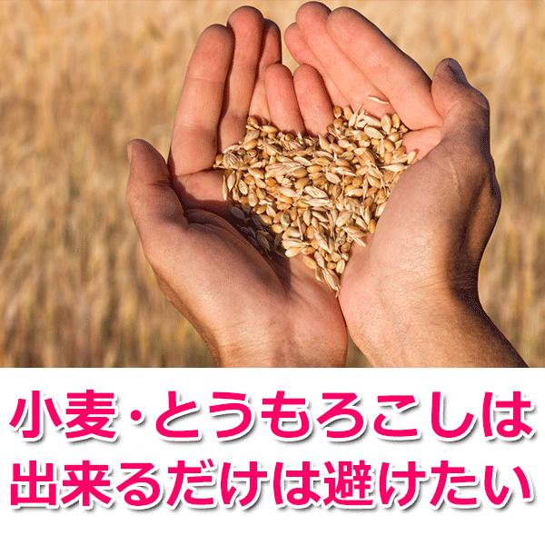 小麦・とうもろこしが出来るだけは避けたい