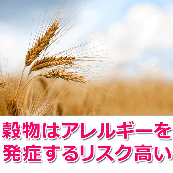 穀物はアレルギーを発症するリスク高い