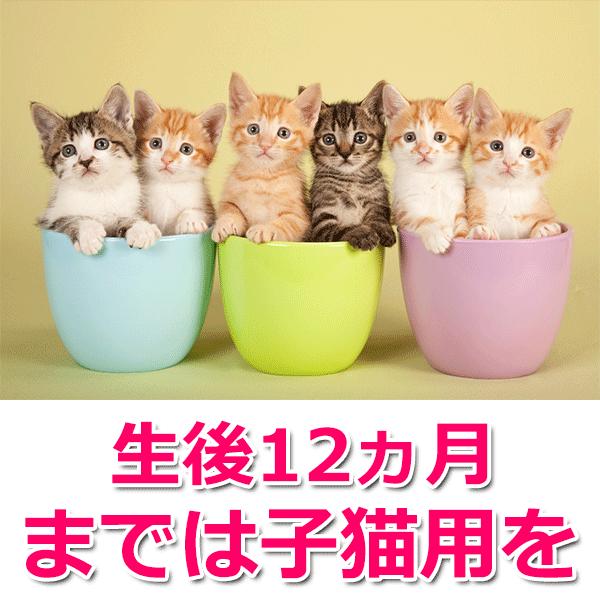 生後12ヵ月までは子猫用を