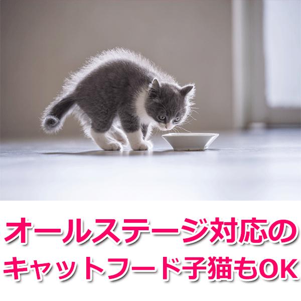 オールステージ対応のキャットフード子猫もOK