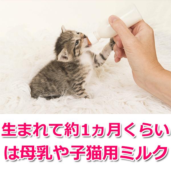 生まれて約1ヵ月くらいは母乳や子猫用ミルク