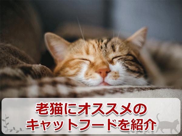 老猫のオススメのキャットフードを紹介