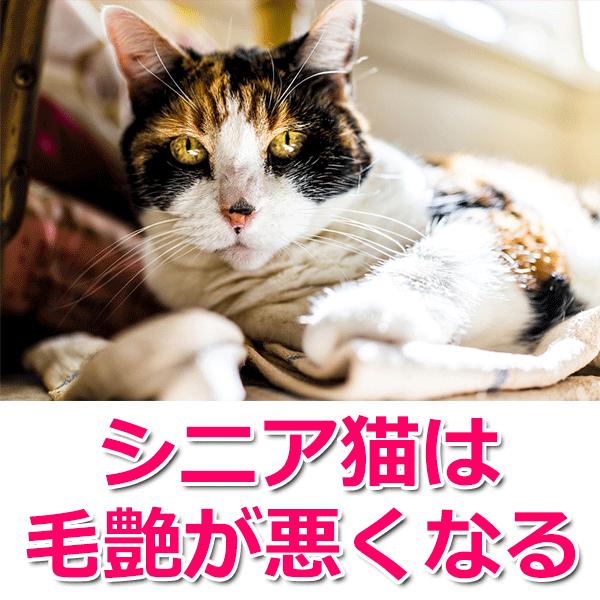 シニア猫は毛艶が悪くなる