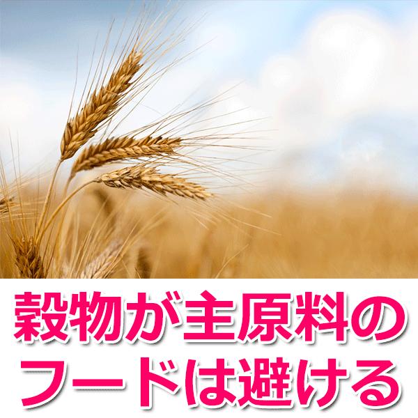穀物が主原料のフードは避ける