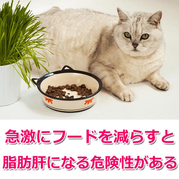 ダイエットにおすすめのキャットフードランキング