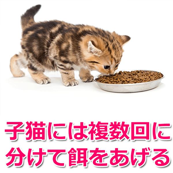 子猫には複数回に分けて餌をあげる