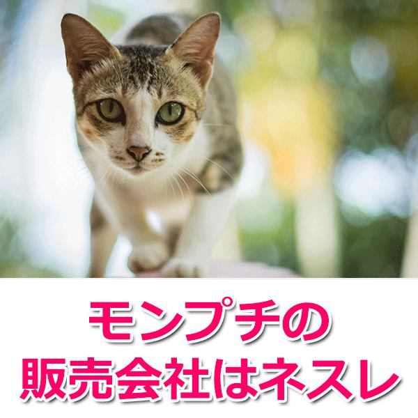 猫用フード「モンプチ」の原材料評価と口コミ評判