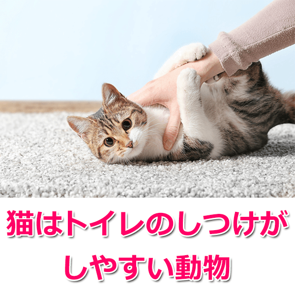 猫がトイレでしない!失敗の原因とおすすめのしつけ方法を解説