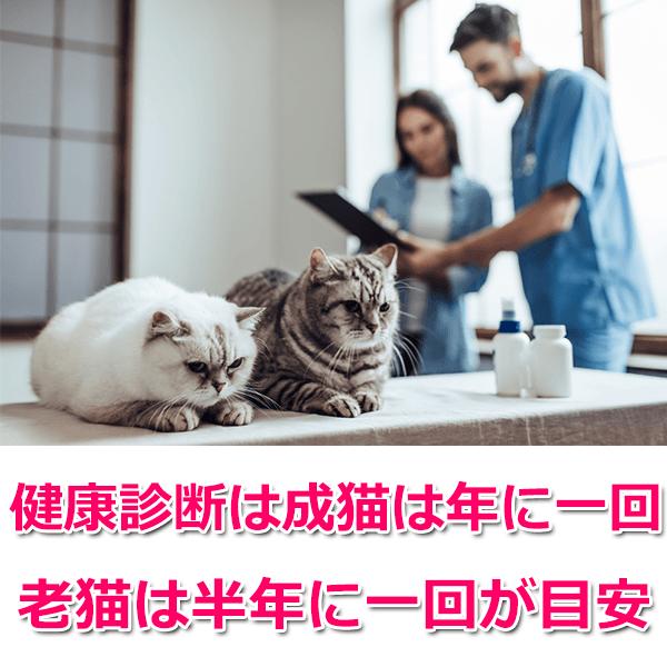 猫が長生きするための4つの秘訣とおすすめのフードランキング