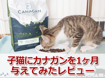 子猫がカナガンを一ヶ月継続して試してみました!